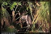植物園大安打鳥:IMG_7689.jpg
