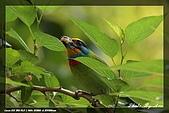 鴞與黑枕藍鶲:IMG_2527.jpg