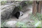 木柵動物園一遊:IMG_2609.JPG