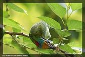 鴞與黑枕藍鶲:IMG_2534.jpg