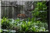 木柵動物園一遊:IMG_2612.JPG