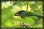 鴞與黑枕藍鶲:IMG_2542.jpg
