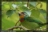 鴞與黑枕藍鶲:IMG_2548.jpg