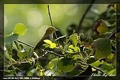 鴞與黑枕藍鶲:IMG_2560.jpg