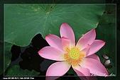 植物園賞荷及陽明山見大冠鷲:IMG_6782.jpg