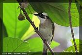 鴞與黑枕藍鶲:IMG_2565.jpg