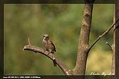 鴞與黑枕藍鶲:IMG_2587.jpg