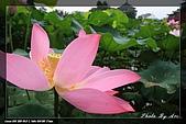 植物園賞荷及陽明山見大冠鷲:IMG_6787.jpg