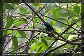 鴞與黑枕藍鶲:IMG_2599.jpg