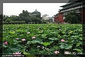 植物園賞荷及陽明山見大冠鷲:IMG_6789.jpg