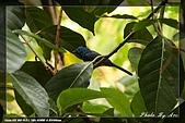 鴞與黑枕藍鶲:IMG_2607.jpg