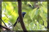 鴞與黑枕藍鶲:IMG_2617.jpg