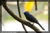 鴞與黑枕藍鶲:IMG_2622.jpg
