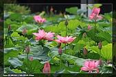 植物園賞荷及陽明山見大冠鷲:IMG_6791.jpg