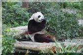 木柵動物園一遊:IMG_2593.JPG