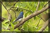 鴞與黑枕藍鶲:IMG_2661.jpg