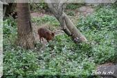 木柵動物園一遊:IMG_2602.JPG