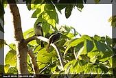 植物園大安打鳥:IMG_7694.jpg