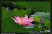 植物園賞荷及陽明山見大冠鷲:IMG_6795.jpg