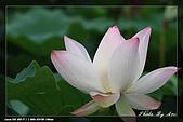 植物園賞荷及陽明山見大冠鷲:IMG_6806.jpg