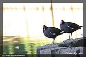 植物園大安打鳥:IMG_7703.jpg