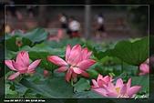 植物園賞荷及陽明山見大冠鷲:IMG_6808.jpg