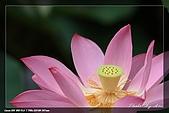 植物園賞荷及陽明山見大冠鷲:IMG_6811.jpg