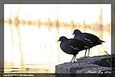 植物園大安打鳥:IMG_7709.jpg