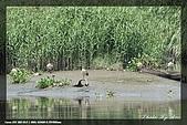五股溼地及荷花公園:IMG_6725.jpg