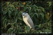 植物園大安打鳥:IMG_7727.jpg