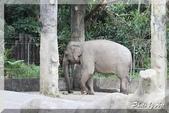 木柵動物園一遊:IMG_2628.JPG