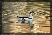 植物園大安打鳥:IMG_7732.jpg
