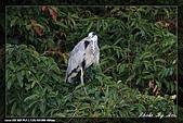 植物園大安打鳥:IMG_7762.jpg