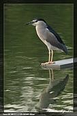 植物園大安打鳥:IMG_7783.jpg