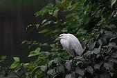 大安森林公園賞鳥趣:IMG_3273