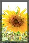 向陽農場一遊:IMG_7896.jpg