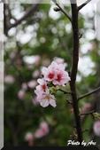 新北 - 桃樂絲森林:IMG_1173.JPG