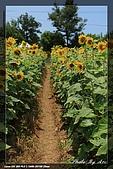 向陽農場一遊:IMG_7904.jpg