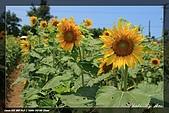向陽農場一遊:IMG_7905.jpg
