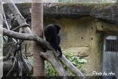 木柵動物園一遊:IMG_2601.JPG