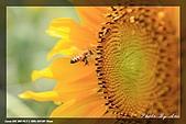 向陽農場一遊:IMG_7911.jpg