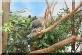 木柵動物園一遊:IMG_2590.JPG