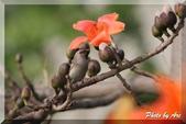 三重 - 栗尾椋鳥:IMG_0994.JPG