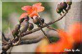 三重 - 栗尾椋鳥:IMG_1011.JPG