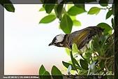 中正賞鳥:IMG_8766.jpg
