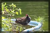 中正賞鳥:IMG_8769.jpg