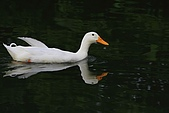 大安森林公園賞鳥:IMG_2904