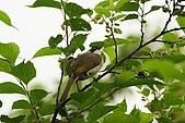 大安森林公園賞鳥趣:IMG_3295