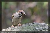 中正賞鳥:IMG_8795.jpg