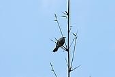 大安森林公園賞鳥:看不出來…